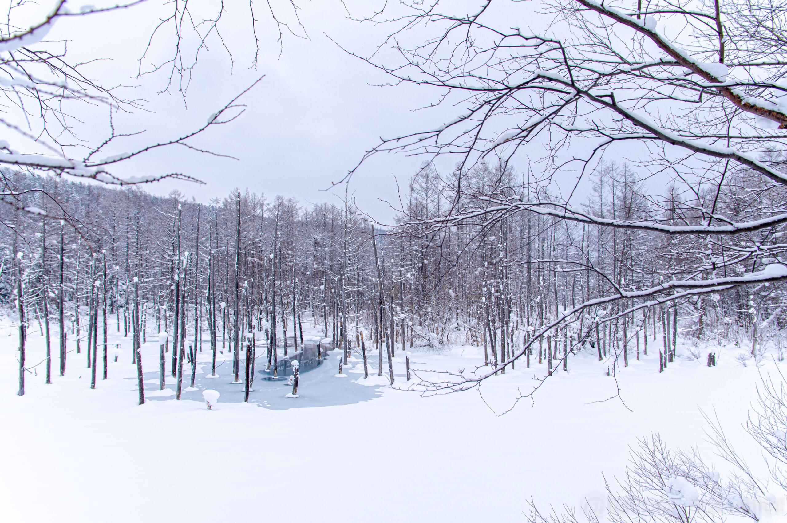 北海道の山奥に潜む秘境!北海道の青い池への行き方!