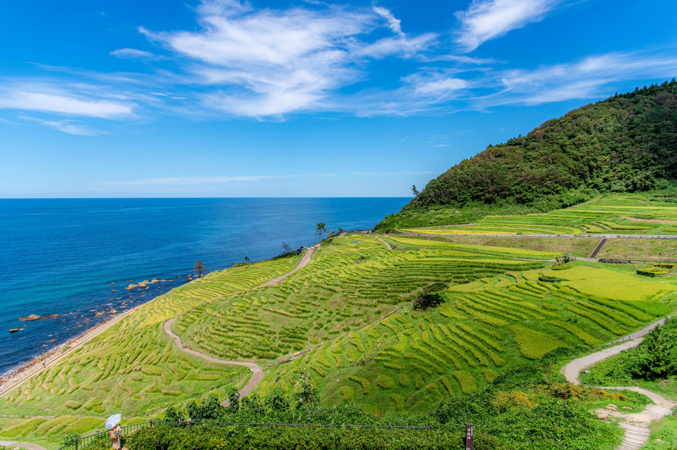 海が見える棚田までバス一本!石川県の白米千枚田への行き方